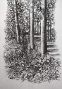 HvVS-bomen-houtskool-tekening